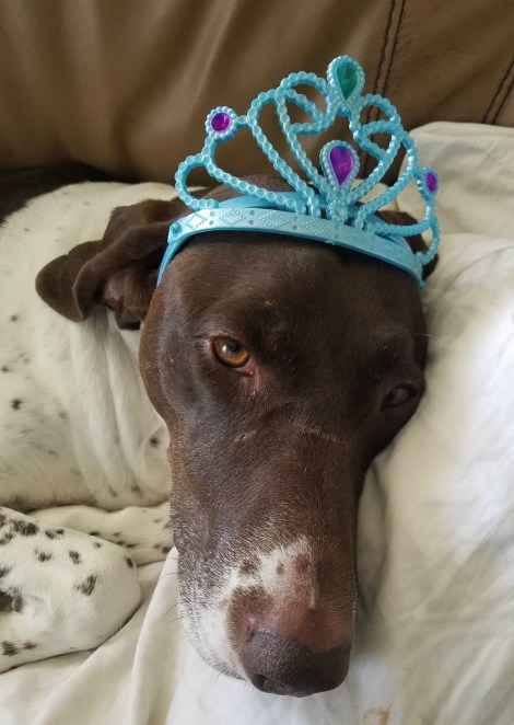 princess dog