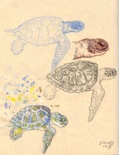 """Anything At All"" Music Video Art: BG Seaturtle Studies"