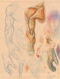 Anatomy_Sketch01