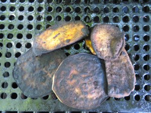 Gently Darkened Sweet Potato