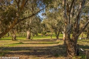 Burra Golf Club - Hole 6