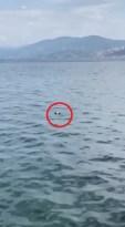 Bursa'da oltaya balık yerine martı takıldı