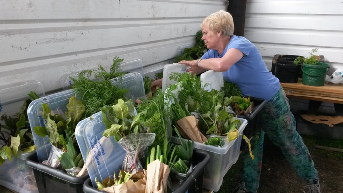 Packing the veg boxes