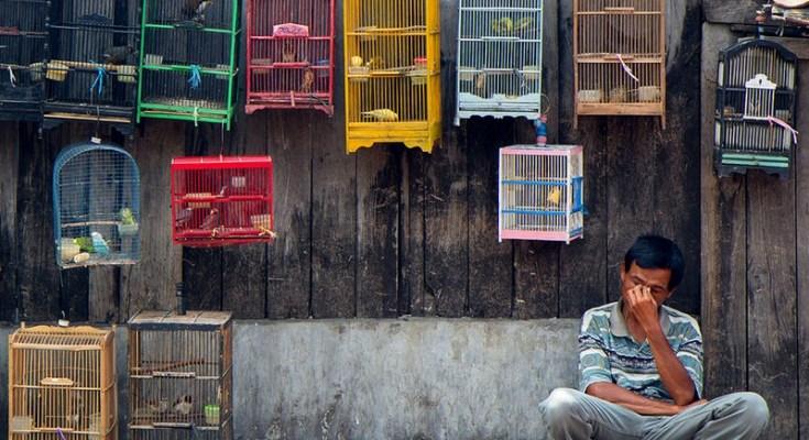 Pelihara burung (onegreenplanet.org)
