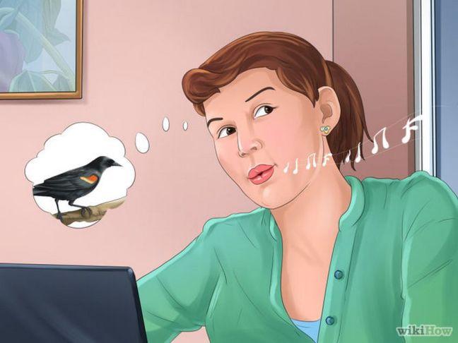 Memanggil burung (wikihow)