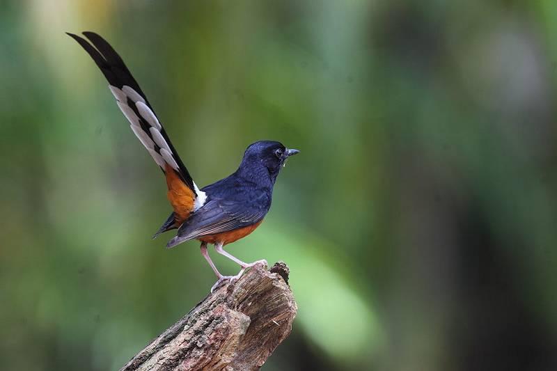 4 Jenis Burung Kicau Termahal Dijual dengan Harga Rp 100 Jutaan