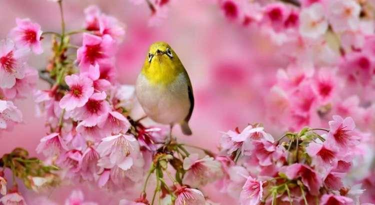 Burung Pleci (birds-wallpapers.com)