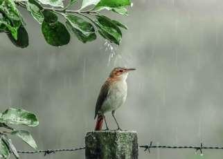 Terapi mandi air hujan (bknpk.com)