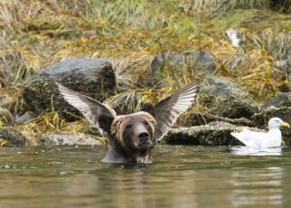 (Photo by Adam Parsons Barcroft Images Comedy Wildlife Photography Awards 2016)
