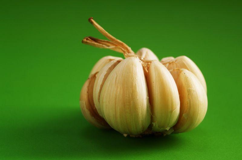8 Manfaat Bawang Putih Untuk Burung Kicau Lengkap dengan Cara Pemberiannya