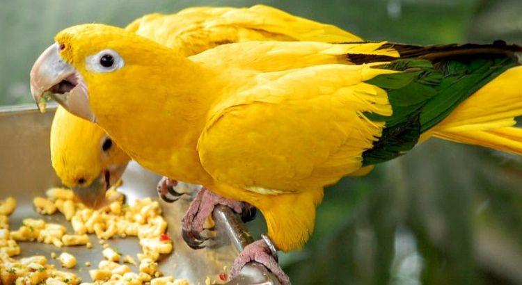 Burung Kakatua (birdclinic.co.za)