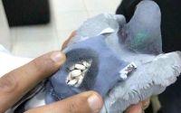 Burung Merpati membawa nark0ba (Twitter.com-CassLowe)