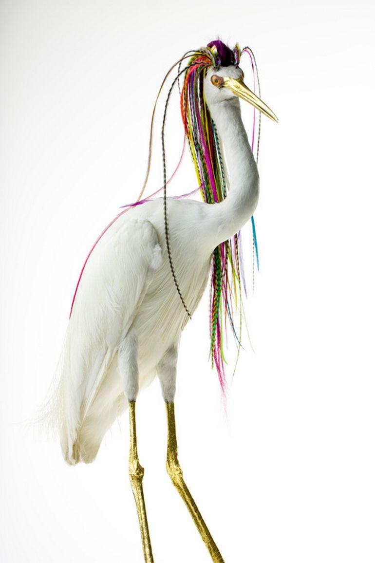 Burung cantik 11 (Karleyfeaver.com)