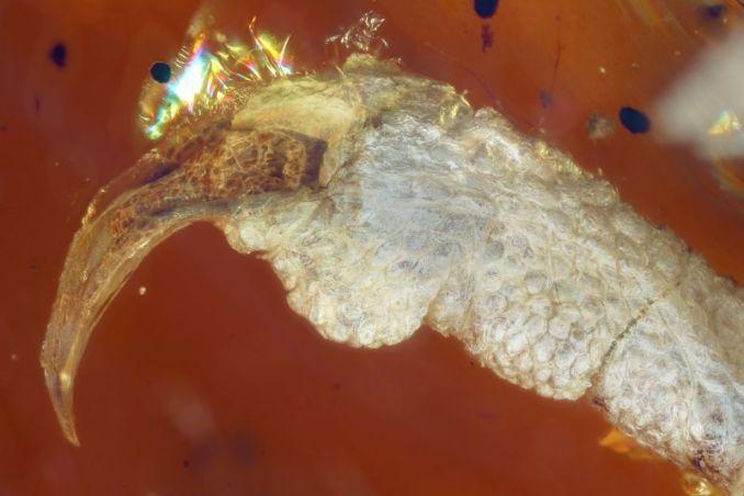 Kulit kaki burung purba (Ming Bai-gizmodo.com)