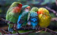 Lovebird Import warna bagus (boredpanda.com)