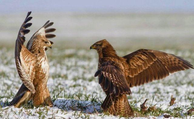 405 Jenis Burung Dilindungi Undang-Undang dan Pemerintah