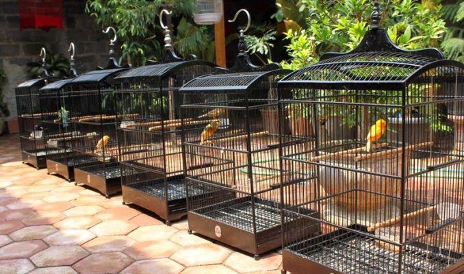 Cara jemur burung di musim hujan (oxibird.blogspot.com)