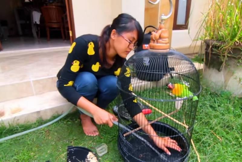 8 Cara Membersihkan Sangkar Burung Kotor, Bau, Berkarat, dan Jamuran