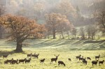 Deer at Ashton Court Bristol
