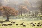 Deer at Ashton Court Bristol