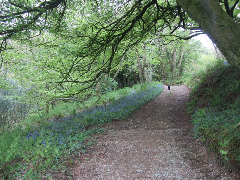 Bluebells Country Footpath Bristol