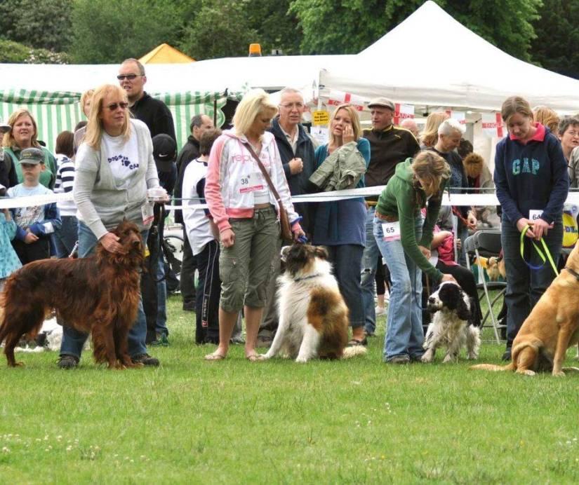 Dog Show Dogfest Bristol