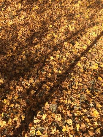 Herbst in Rheinbreitbach