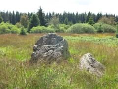 Hohes Venn - Felsen2