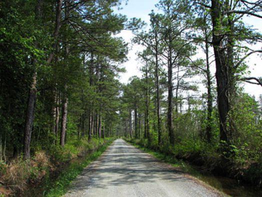 Bosques-encantados (2)