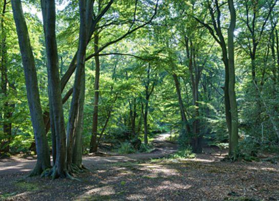 Bosques-encantados (6)