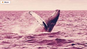Lee más sobre el artículo Número de ballenas de Bitcoin alcanza un máximo histórico