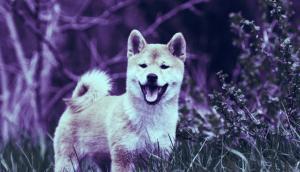 Lee más sobre el artículo Una cuenta de Twitter de Dogecoin vuelve a la vida después de 6 años