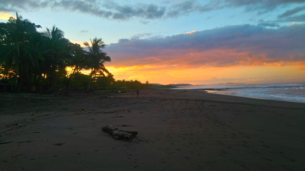 Playa Ostional, Costa Rica, Tortuga Lora