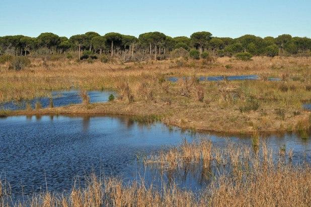 Que ver en Doñana