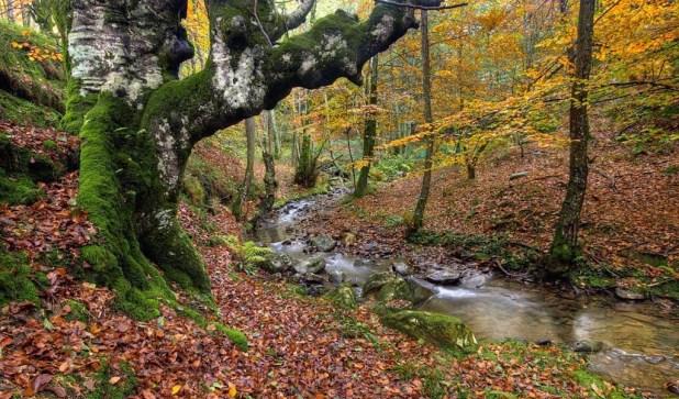 rutas al Hayedo de Urkiola