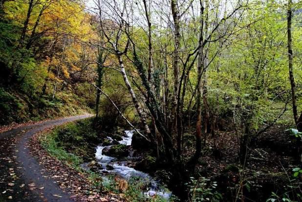 rutas por el bosque de Ponga