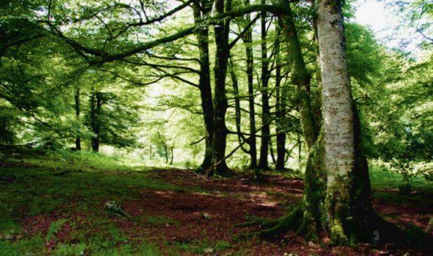 Bosque de Pome