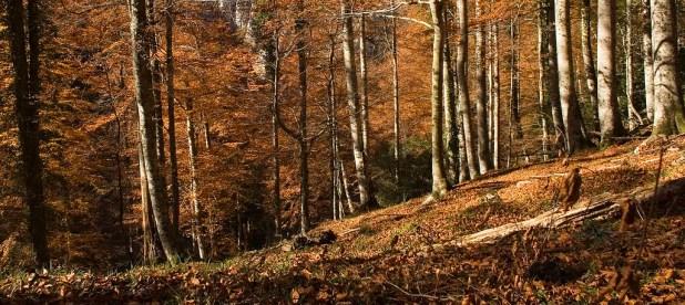 Bosque de Pome en otoño