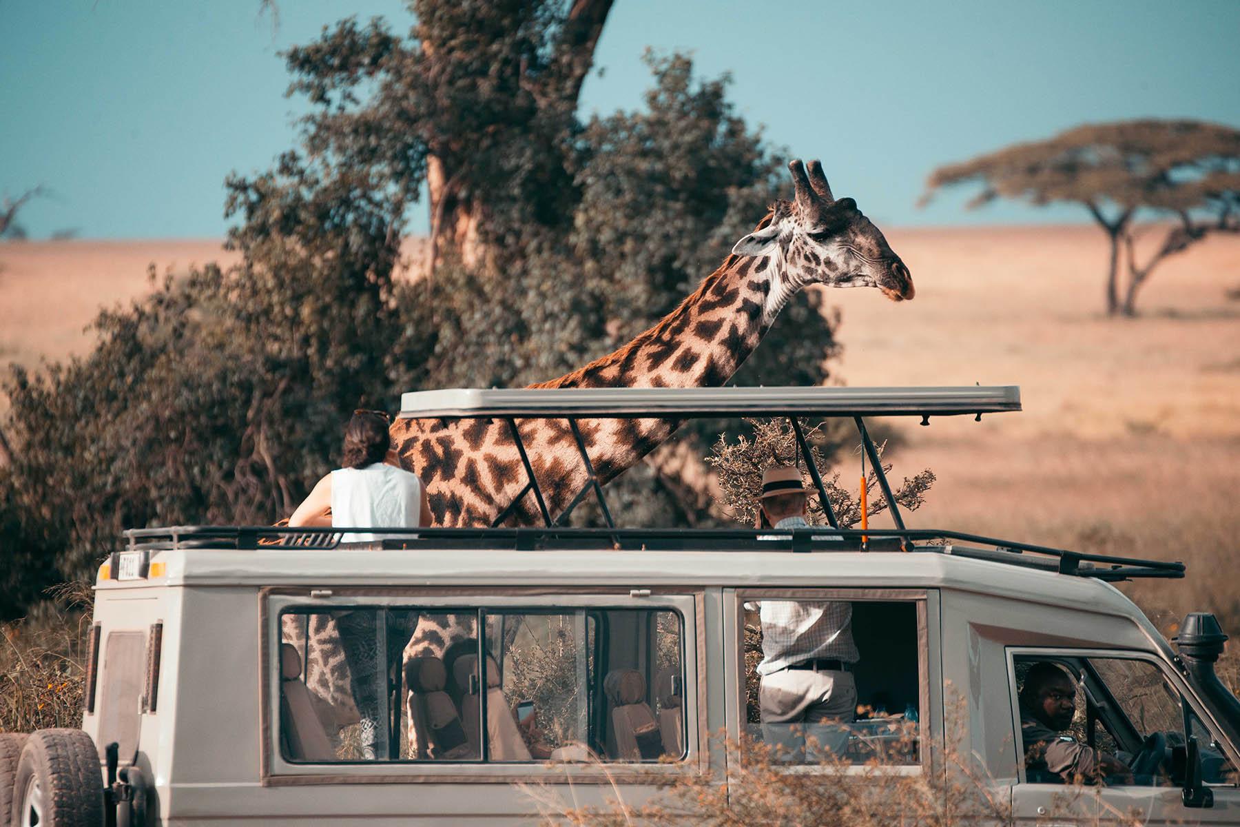 serengeti-7