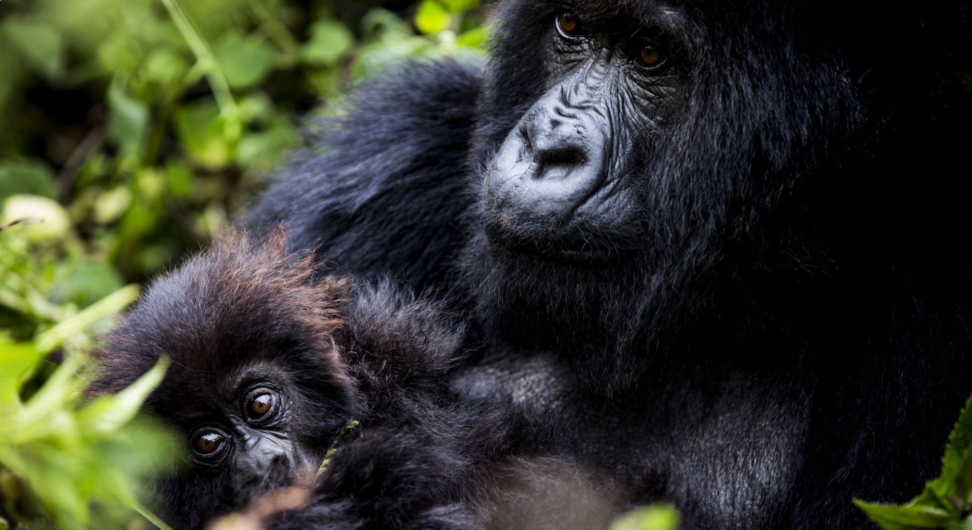 Tanzania & Zanzibar Timeless & Gorilla Trekking in Rwanda