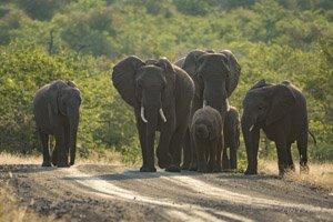 Elephant Print 001 – Canvas or Block Mount