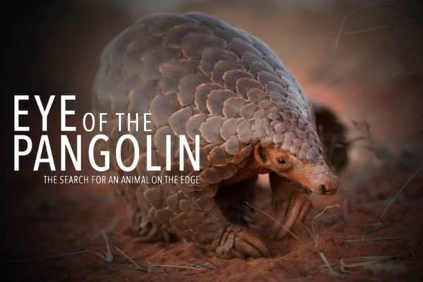 Eye of the Pangolin Film – Pangolin.Africa