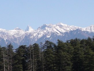 Image source: https://commons.wikimedia.org/wiki/File:Mountain_pine_forest.jpg