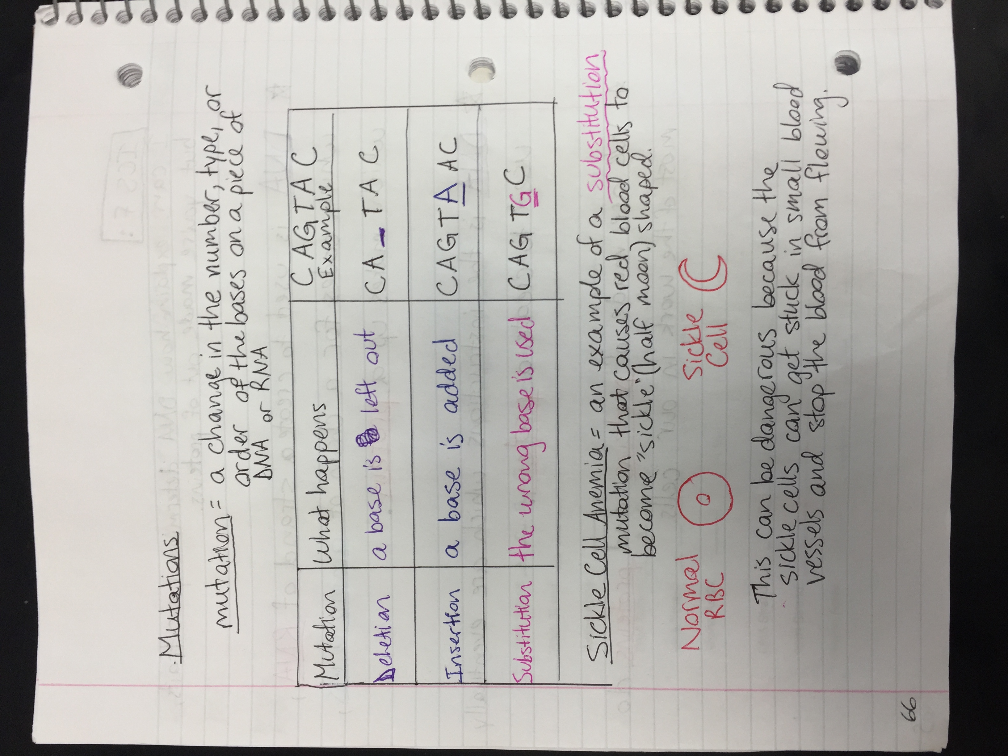 Cell And Heredity 8th Grade Worksheet