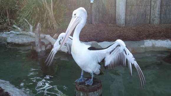 タロンガ動物園 鳥