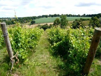 a'Becketts Vineyards