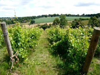 a'Becketts Vineyards