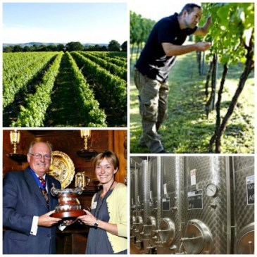 English Wines are terrific quality and are delicious, from Ridgeview, to Chapel Down and smaller producers llike Albourne Estate in West Sussex, Bush Vines sell them.