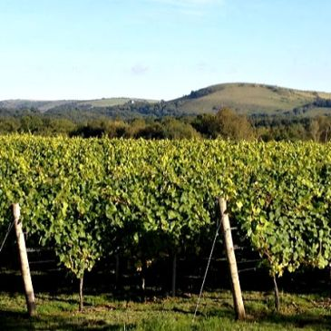 England's Vineyards Great and Small - Time to discover the Taste of England;