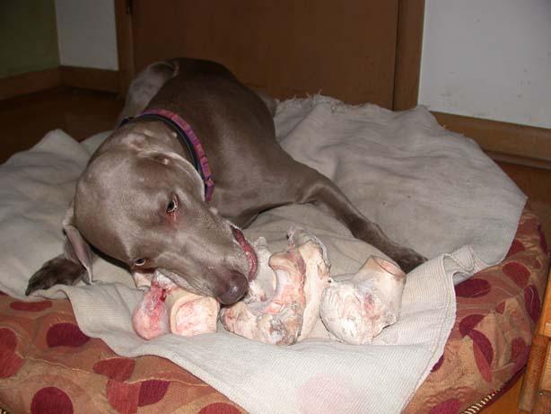 cassie steals all the bones